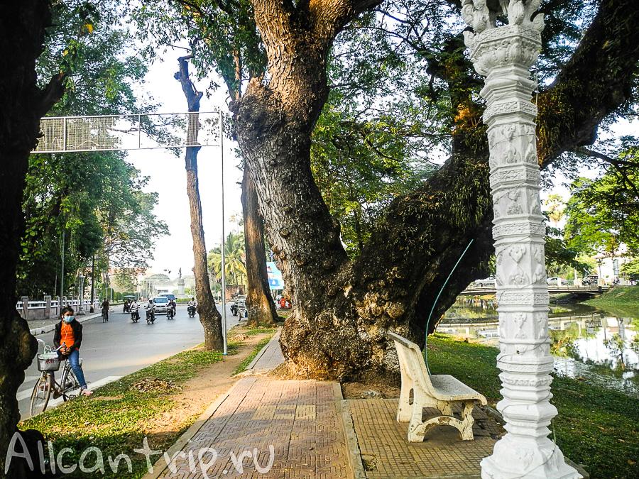 Дерево в Сием Рипе
