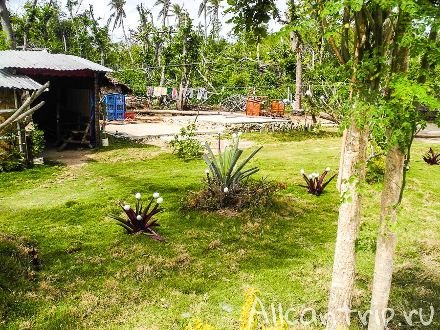 Странные растения на Малапаскуа