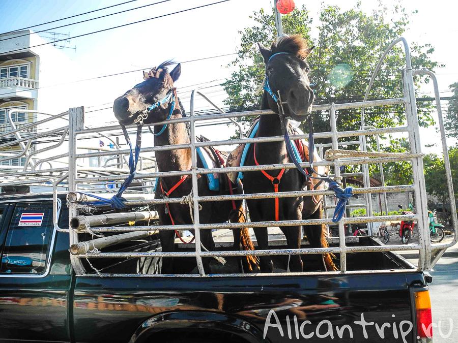 Лошади в Ча аме