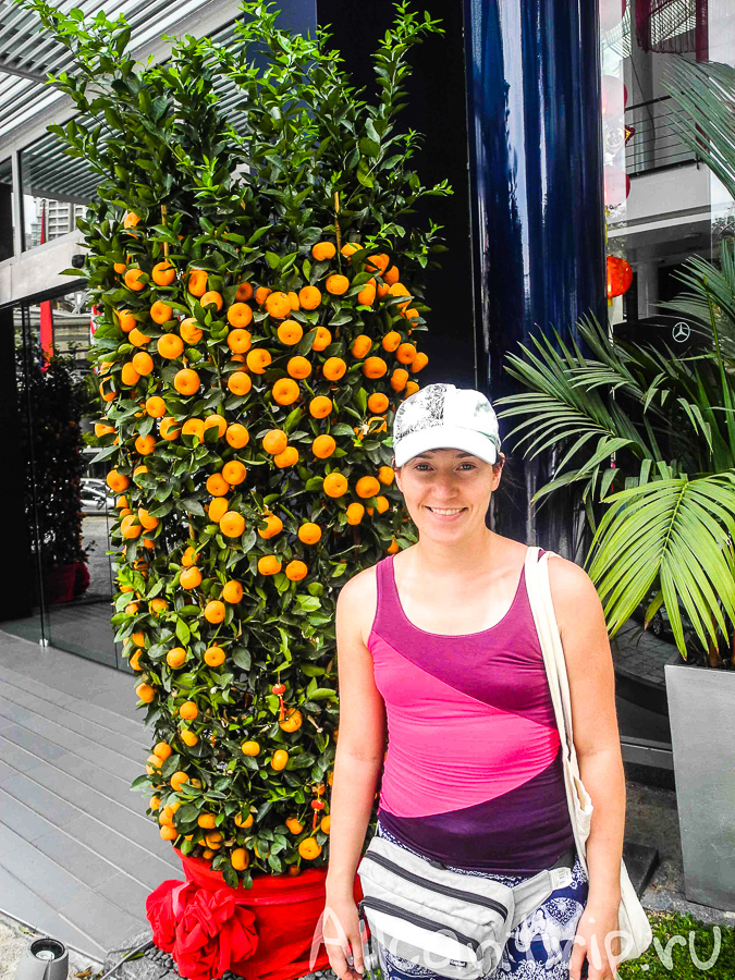 Мандариновое дерево в Куала-Лумпур