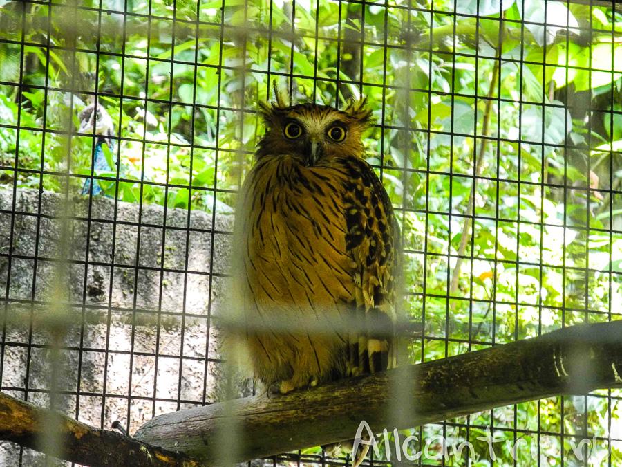 Сова в парке птиц в Куала-Лумпур