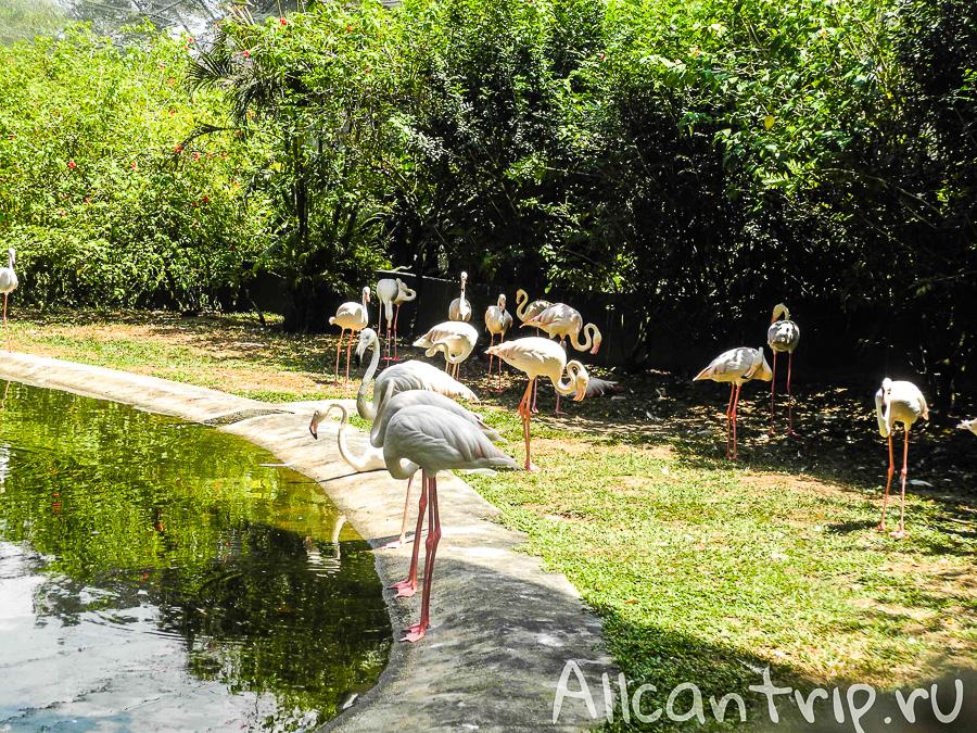 Фламинго в парке птиц в Куала-Лумпур