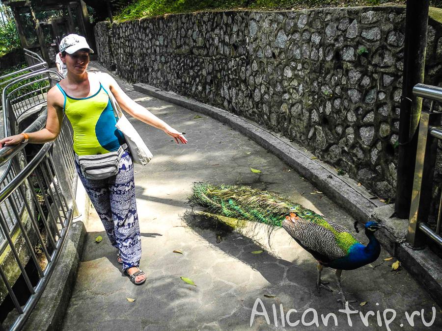 В парке птиц в Куала-Лумпур
