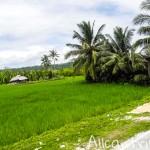 Живописные пейзажи Бохола (Филиппины)