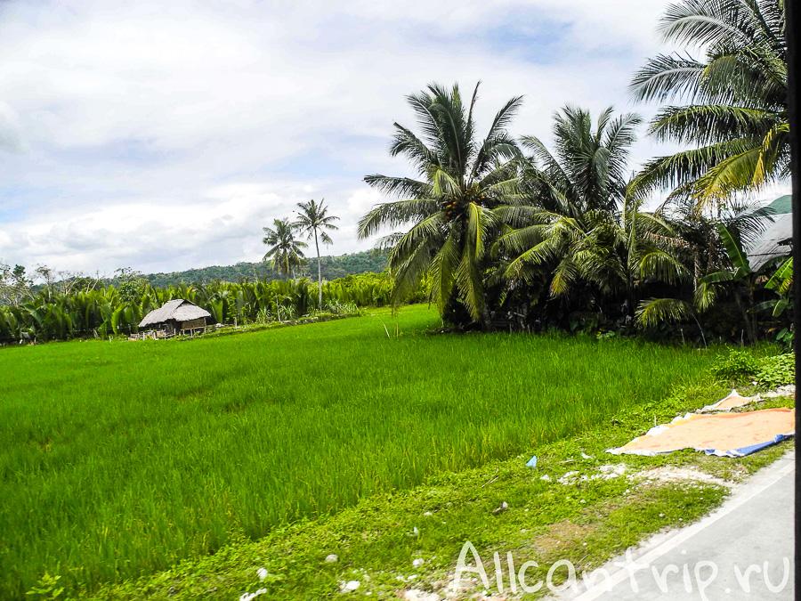 Рисовые поля на острове Бохол