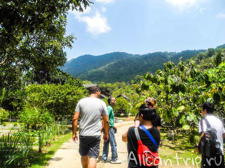 Ферма тропических фруктов на Пенанге