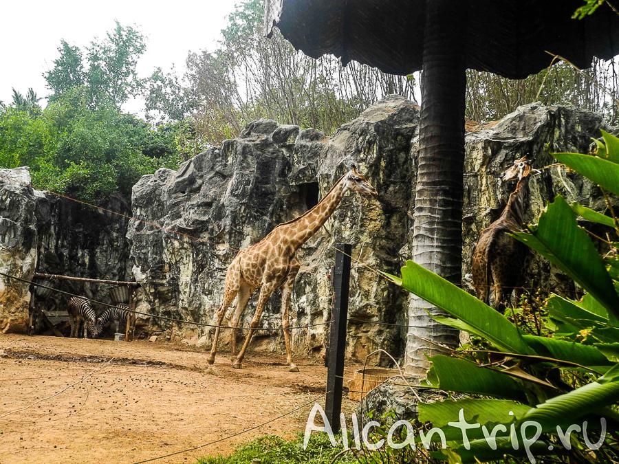Жирафы В зоопарке Бангкока Dusit Zoo