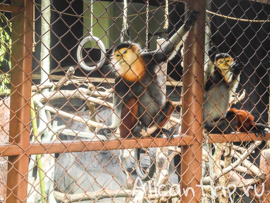 Обезьяны В зоопарке Бангкока Dusit Zoo