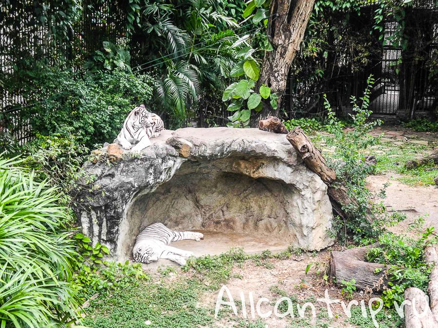 Тигры В зоопарке Бангкока Dusit Zoo
