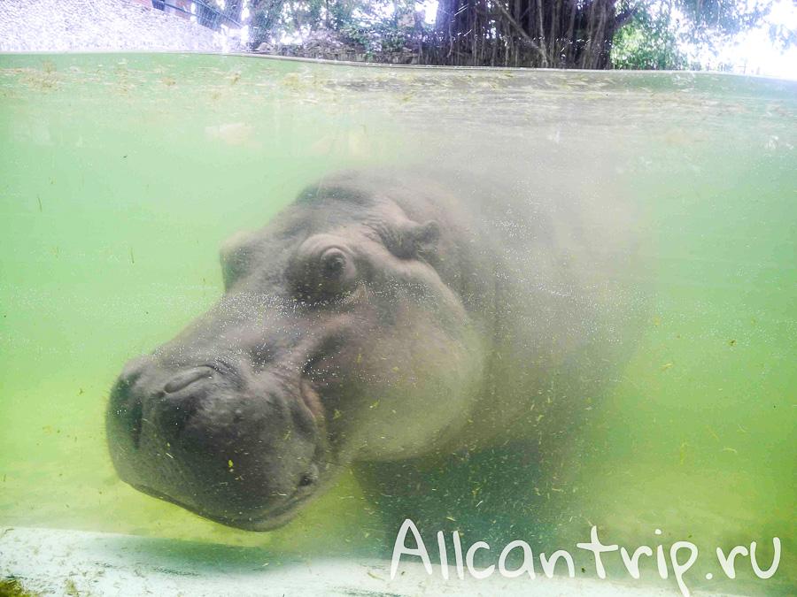 В зоопарке Бангкока Dusit Zoo