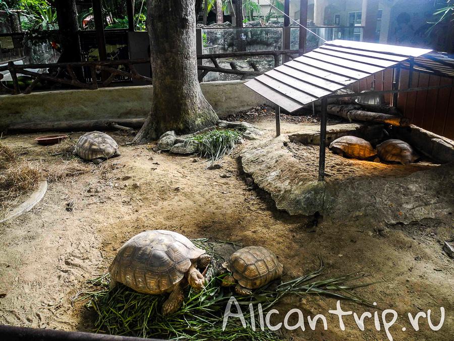 Черепахи В зоопарке Бангкока Dusit Zoo