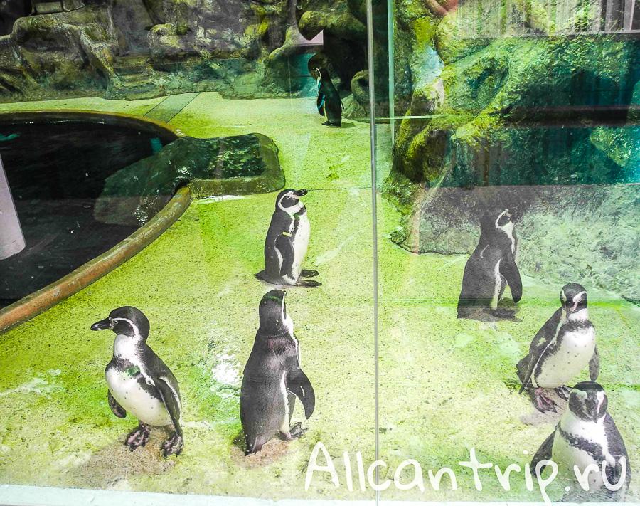 Пингвины В зоопарке Бангкока Dusit Zoo