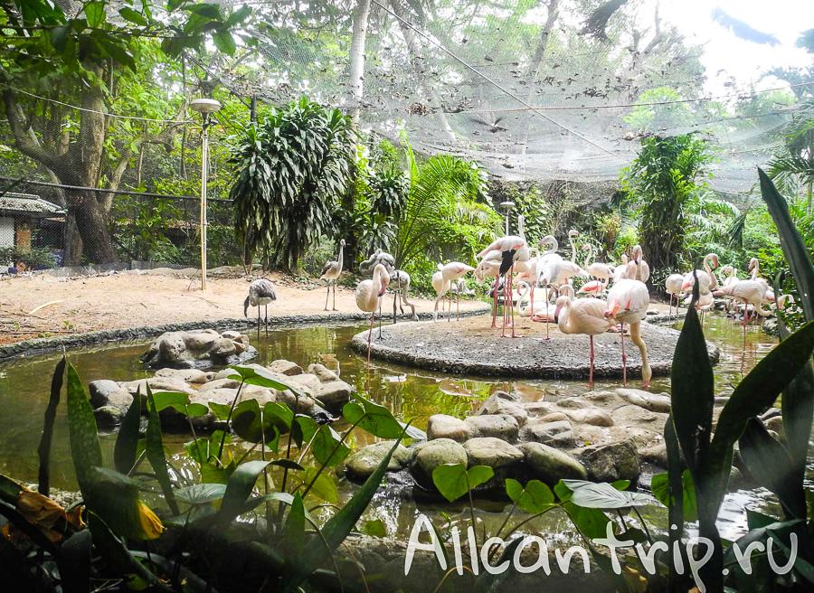 Розовые фламинго В зоопарке Бангкока Dusit Zoo