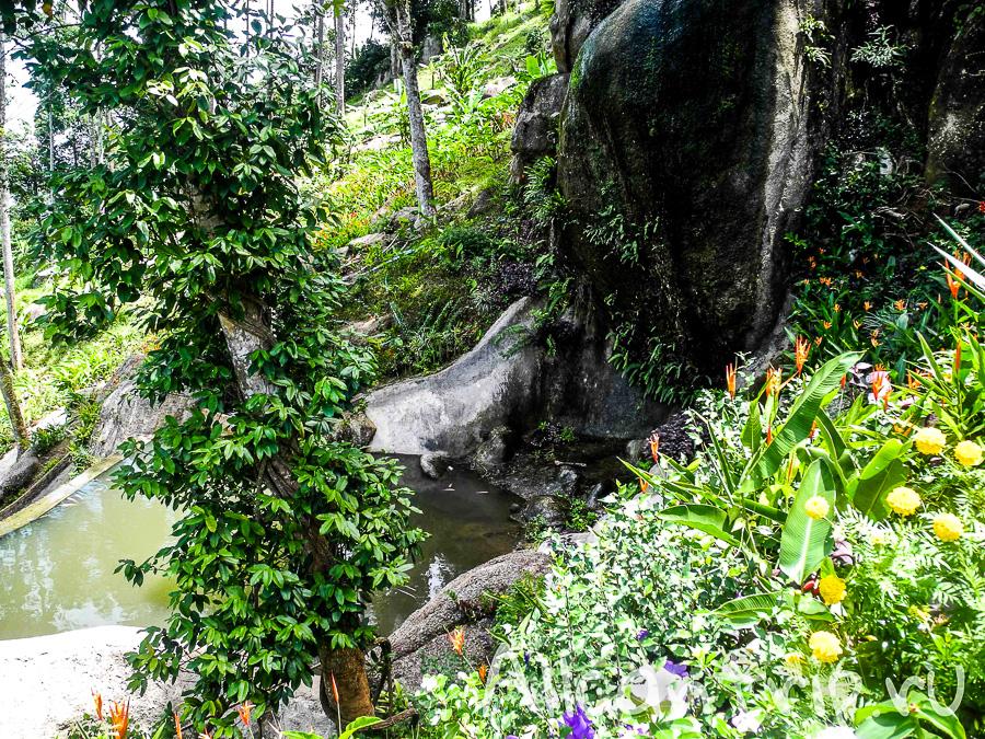 Paradise Park Farm Samui