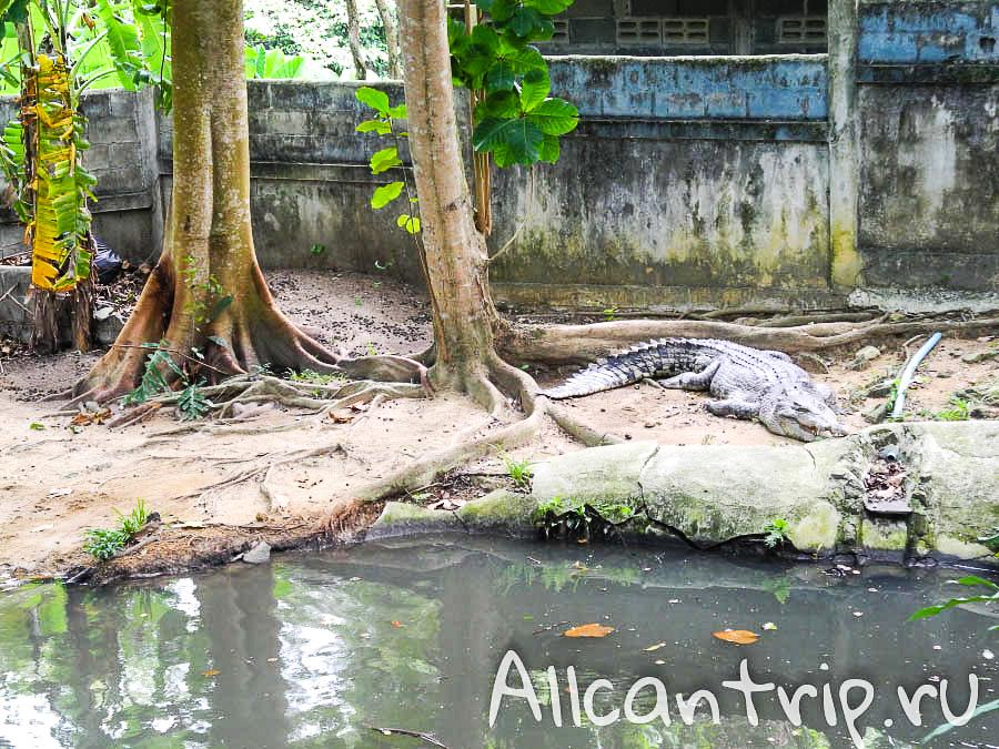 Шоу крокодилов в Сафари-парке на Самуи