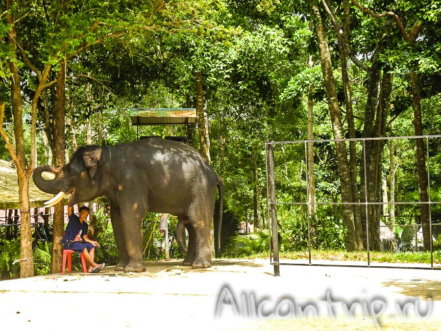 Катание на слоне на Самуи