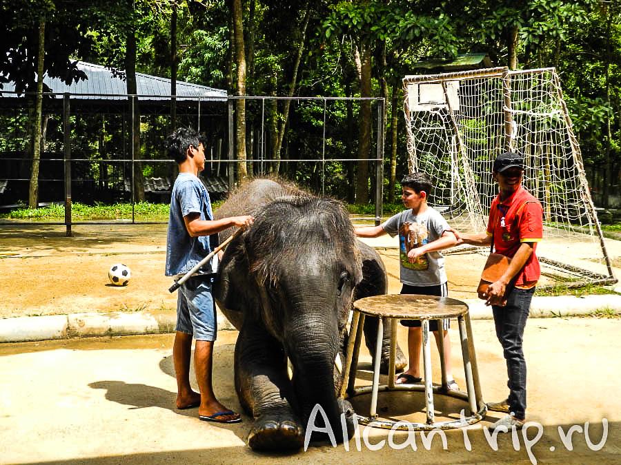 Прокатиться на слоне на Самуи