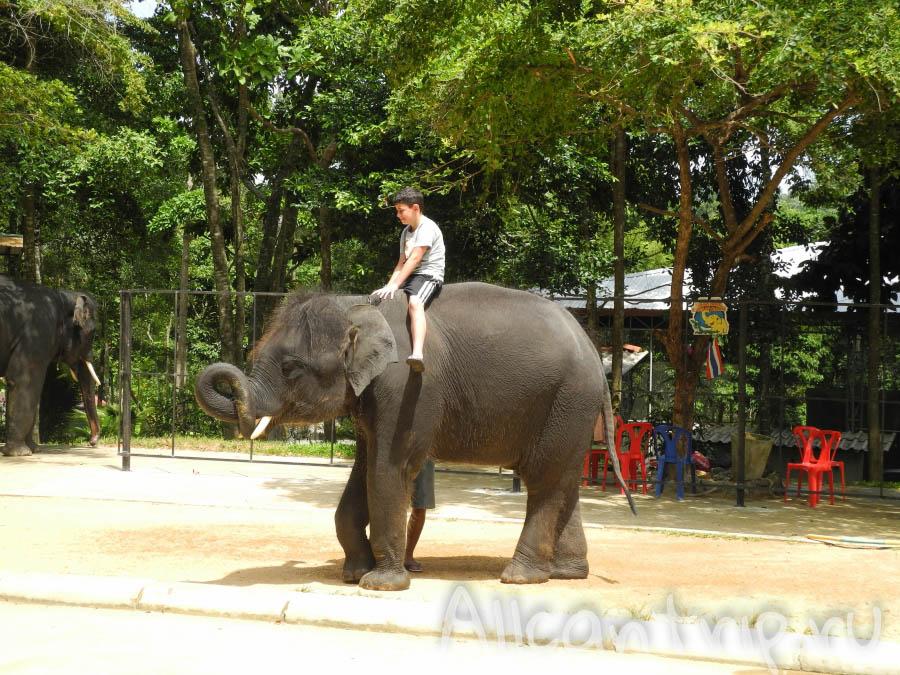 катание на слоне самуи