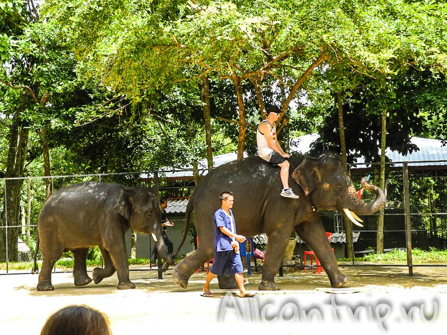 Как прокатиться на слоне на Самуи