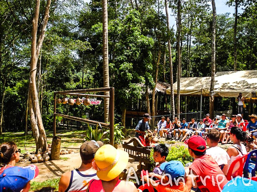 Шоу обезьян в Сафари-парке на Самуи