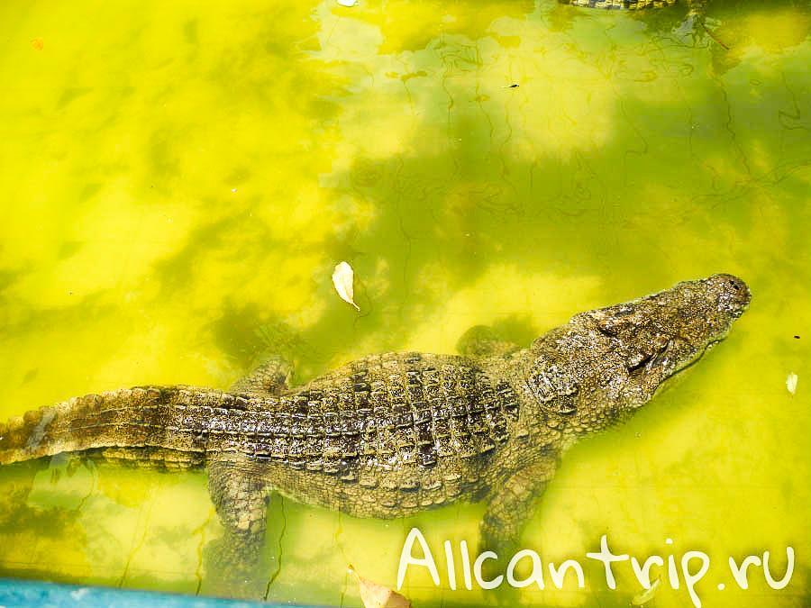 Шоу крокодилов на Самуи