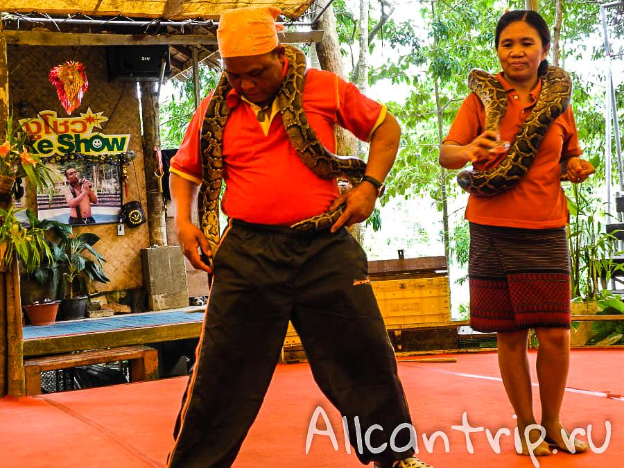 Танцы со змеями на Самуи