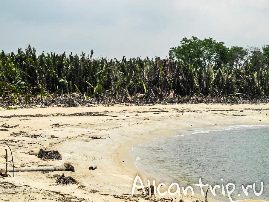 Деревья на пляже PCB Кота-Бару