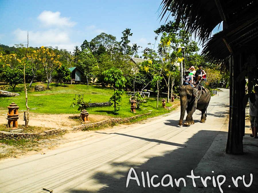 Слоны в Сафари-парке на Самуи