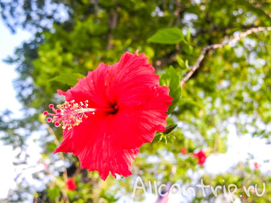 цветы на улице города Ипох