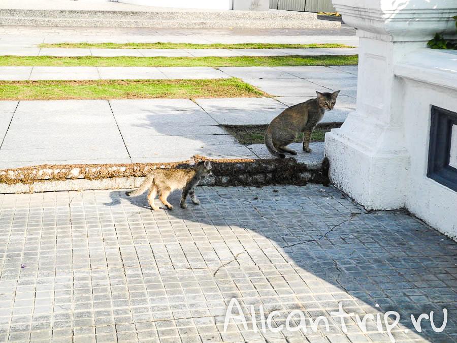 коты на улице в Ипох