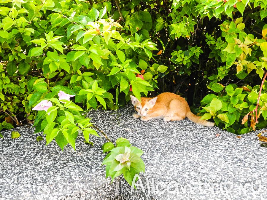 котенок на улице малайского города Ипох