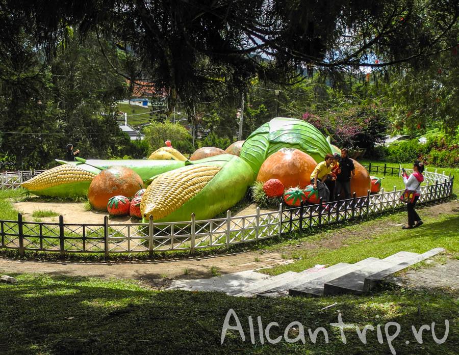 Гигантские овощи в Кэмерон Хайлендс