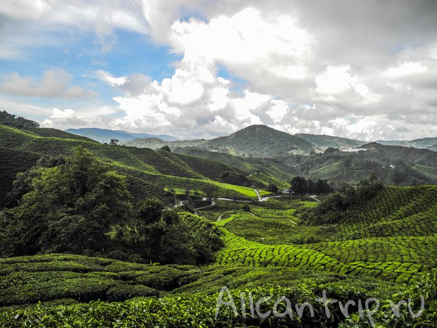 чайные плантации Тана Раты