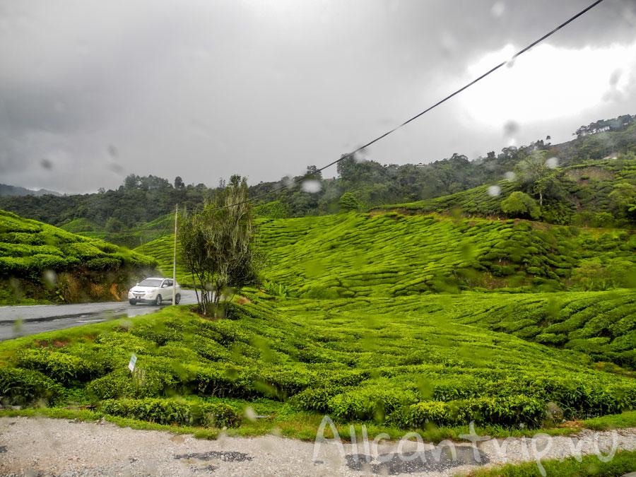 чайные плантации Малайзии