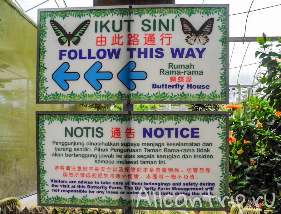 Butterfly farm в Малайзии