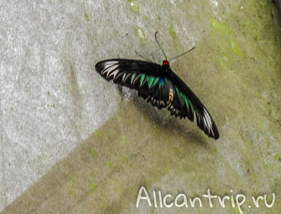 Бабочки Малайзии