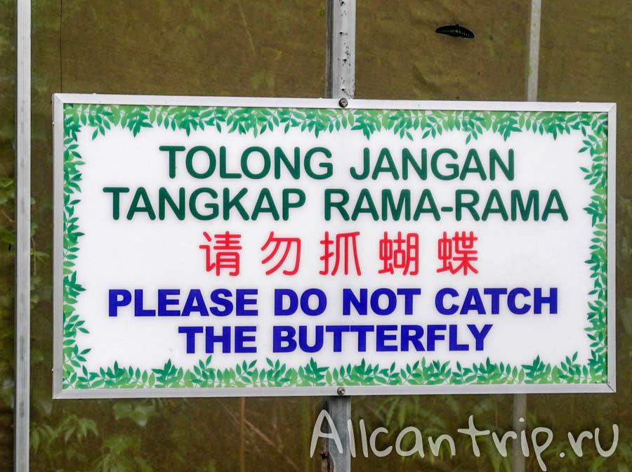 На ферме бабочек Cameron Highlands