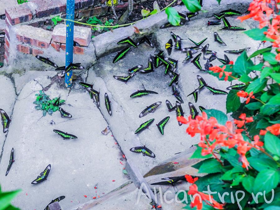 Ферма бабочек Малайзия