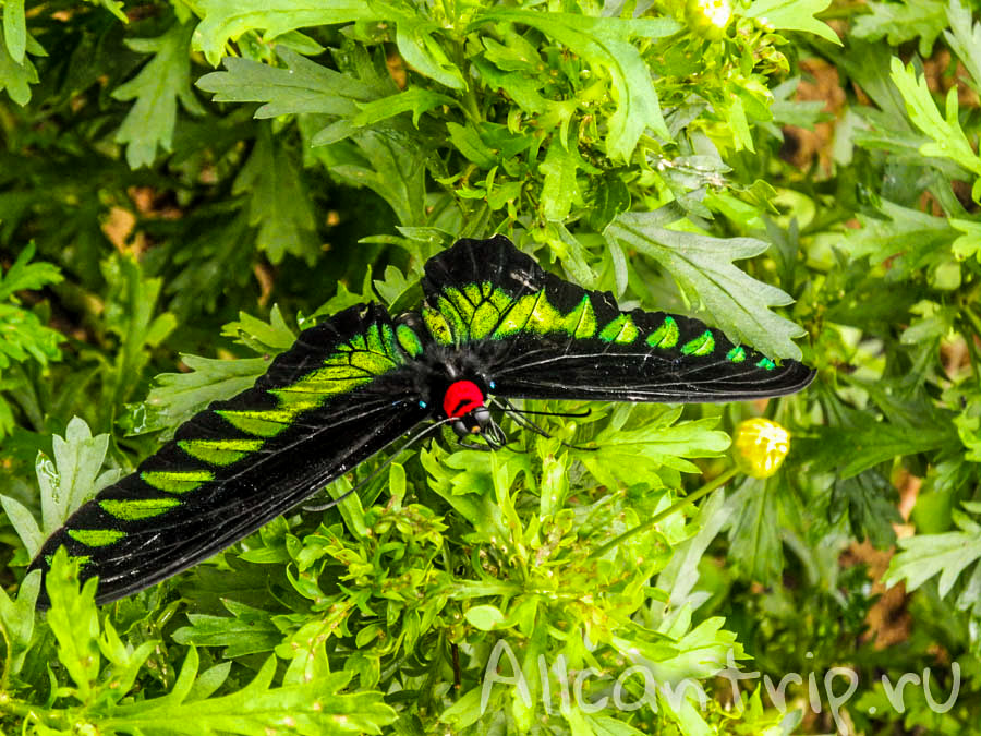 Тропические бабочки Малайзии