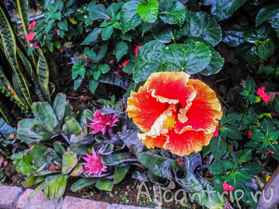 Цветы Малайзии