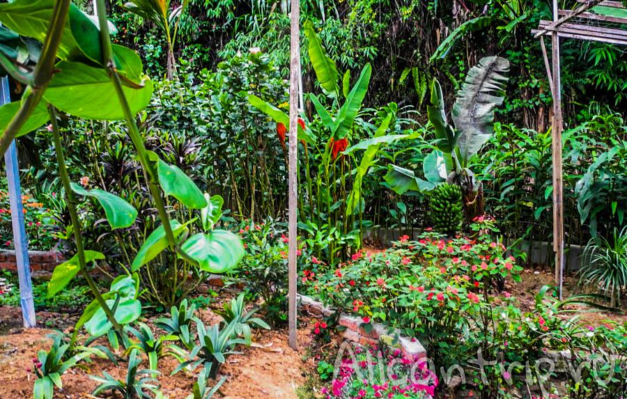 Тропическая ферма в Тана Рате, Малайзия