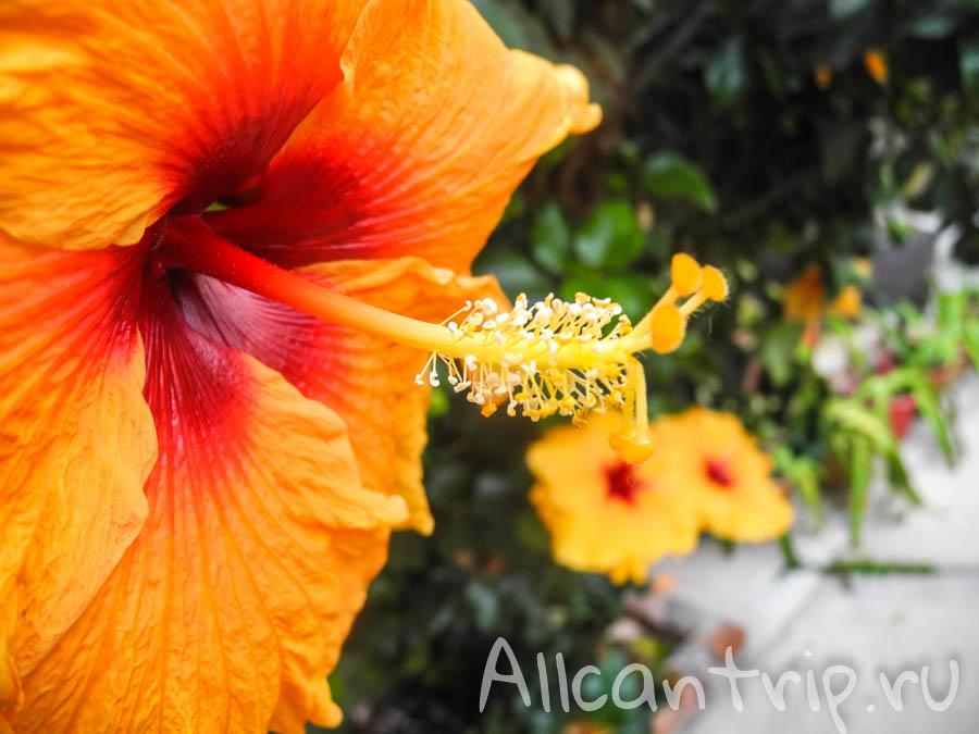 Цветы в Малайзии
