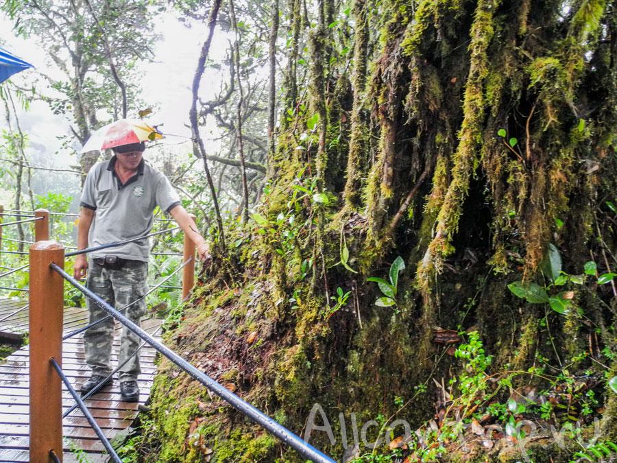 таинственный лес в тана рате
