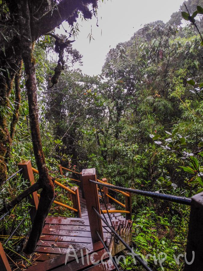 в джунглях малайзии