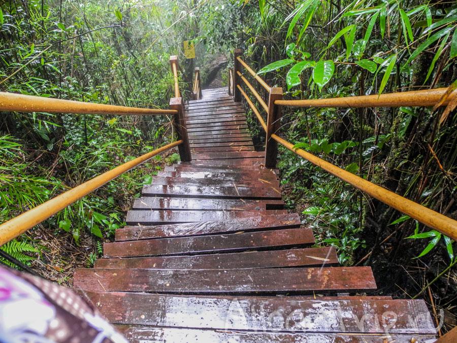 скользкая дорожка в лесу в Тана Рате