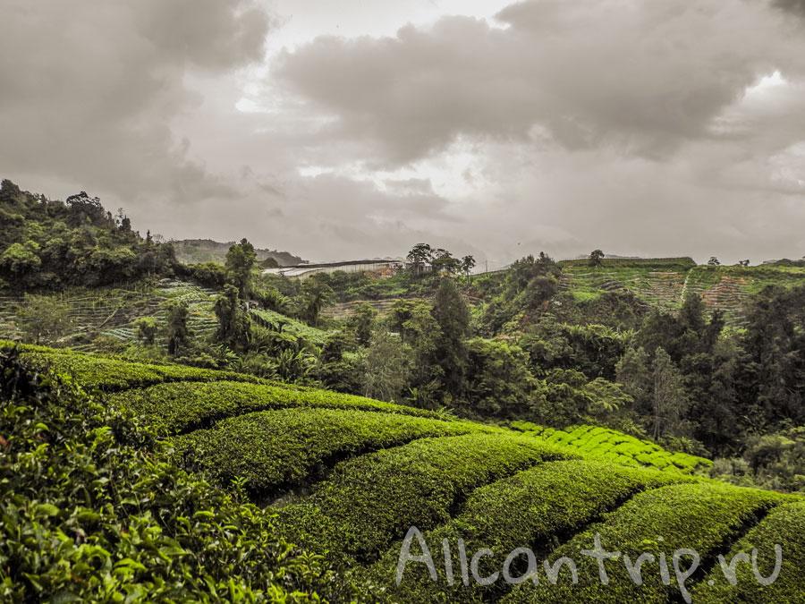 потрясающие виды на чайные плантации в Малайзии