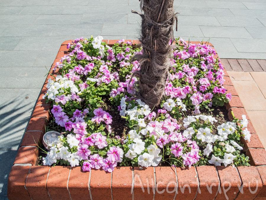 цветы в парке Алании