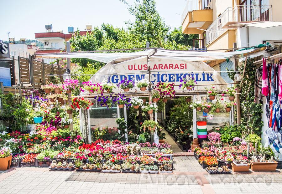 цветочный магазин в алании