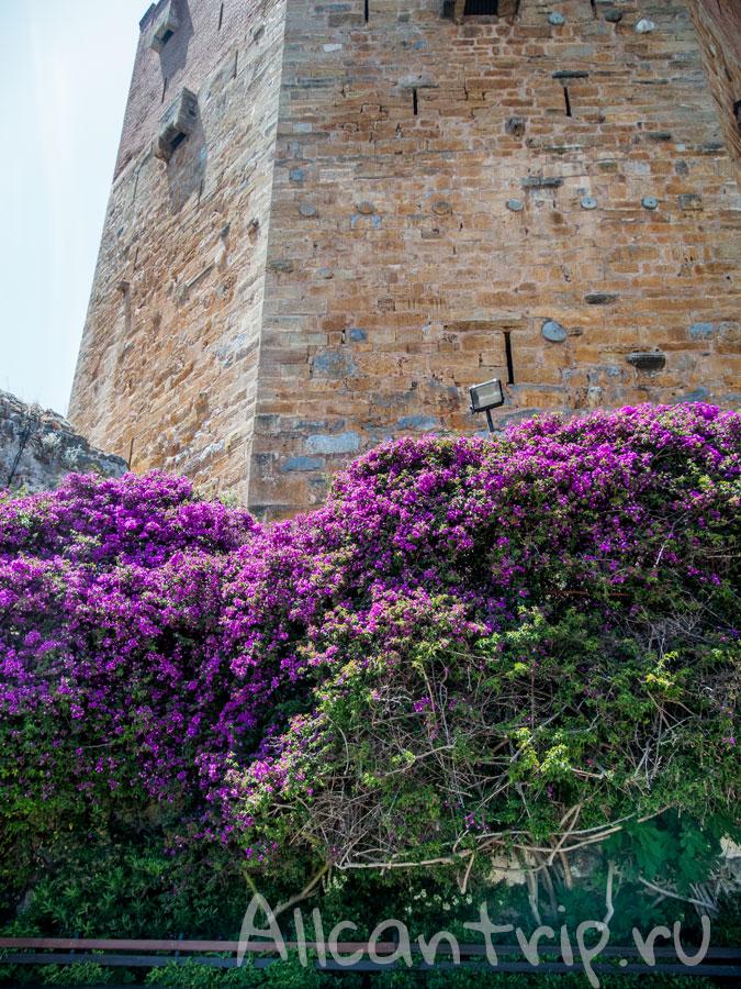 кызыл куле в цветах