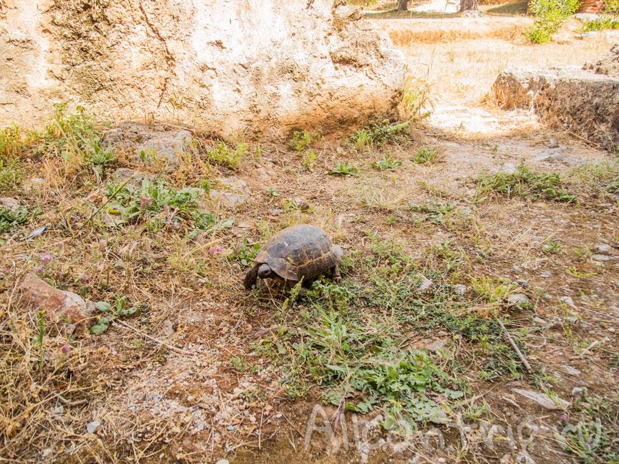черепахи в Алании